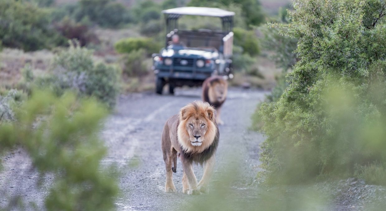 Luxury Travel Safari