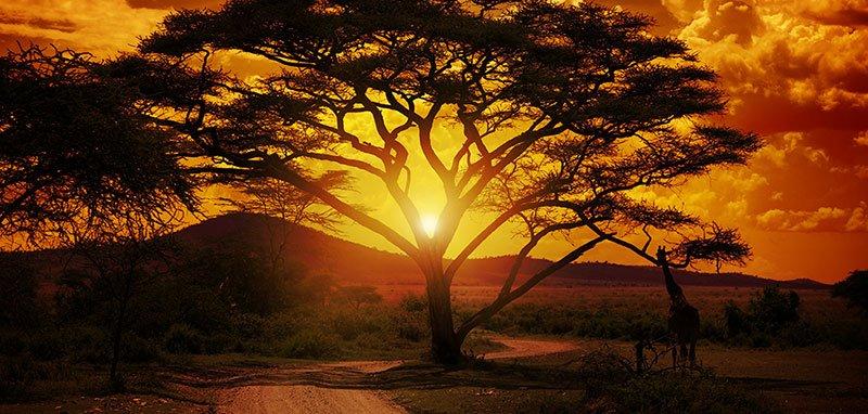tramontoLR