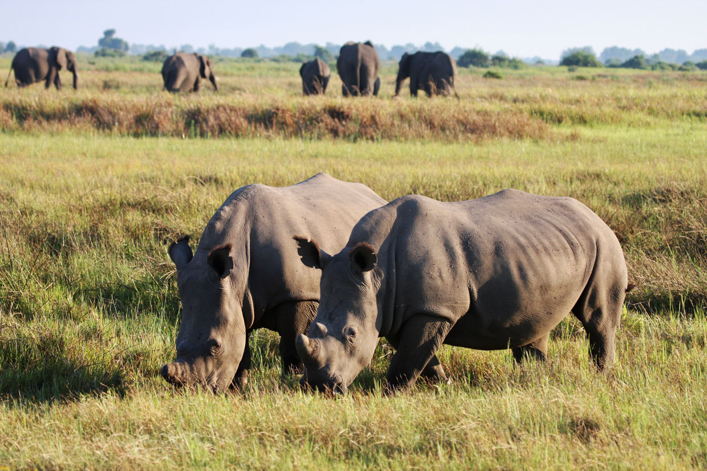 Botswana Moremi Reserve