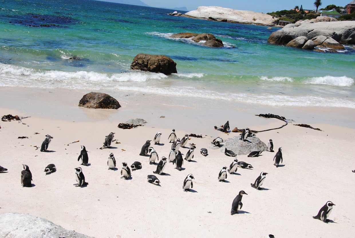 Cape Town Pinguini