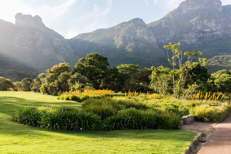 Cape Town Kirstenbosch Garden