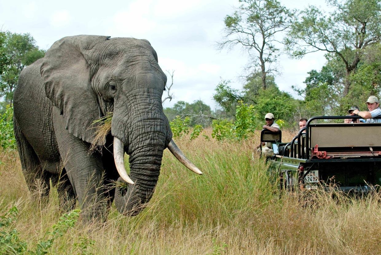 Manyeleti Safari