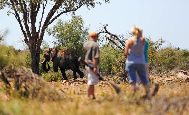 Safari a piedi