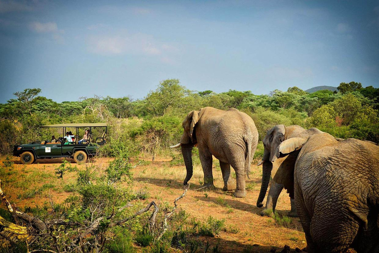 Safari in Jeep aperta in Thornybush