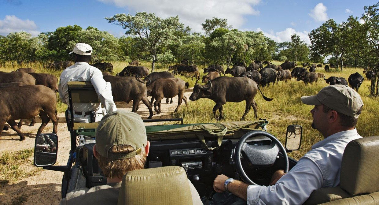 Thornybush Safari Time