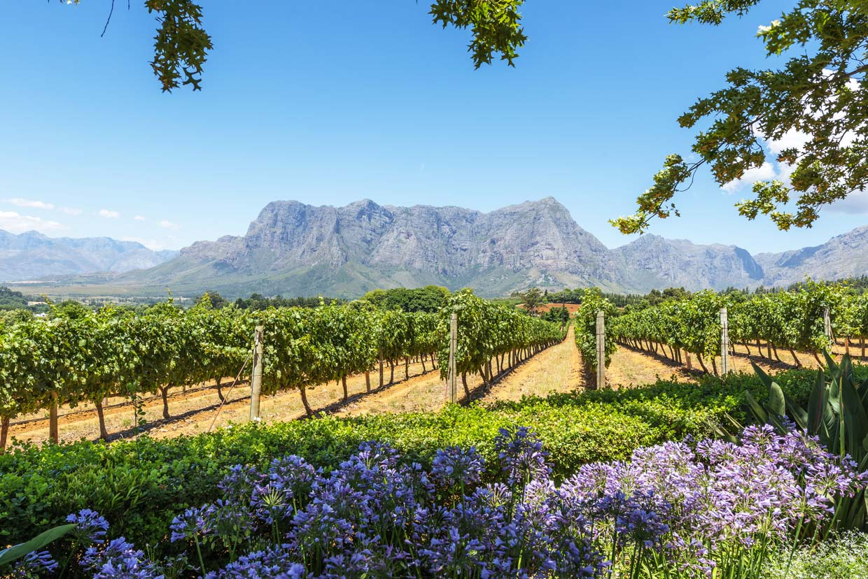 Winelands Cape Town