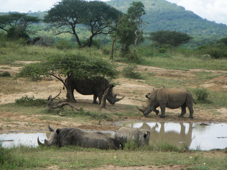 Rinoceronti Hluhluwe