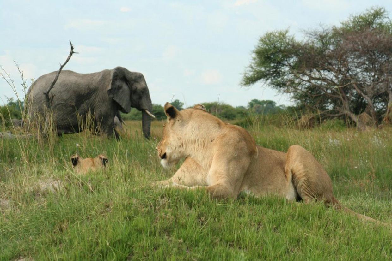 Botswana Morami