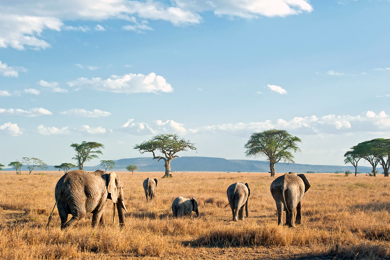 Tanzania Serengeti Elefanti