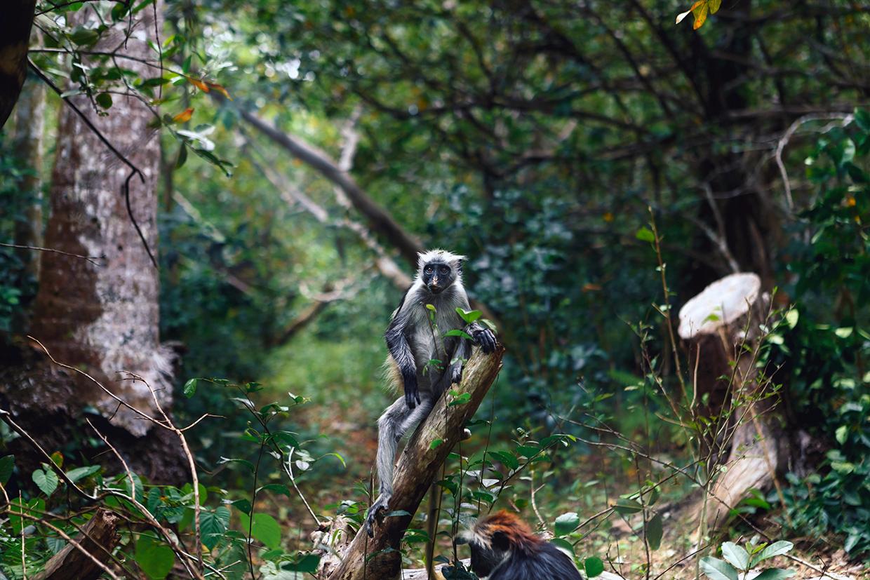 Zanzibar Foresta