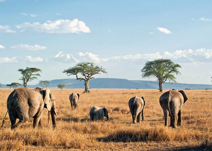 Tanzania Serengeti Park