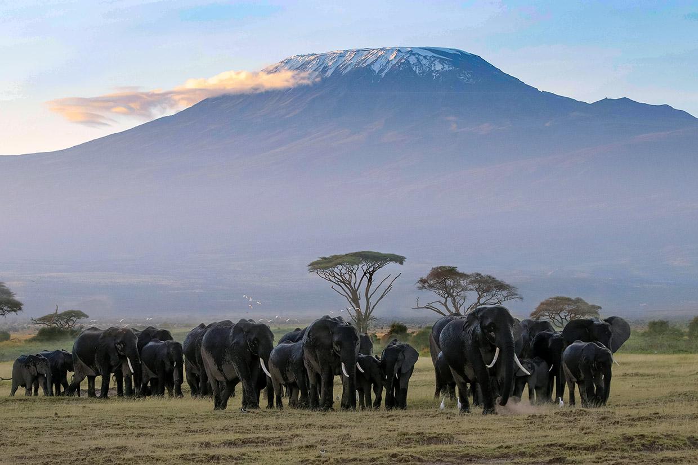 Kenya Elefanti e Kilimanjiaro