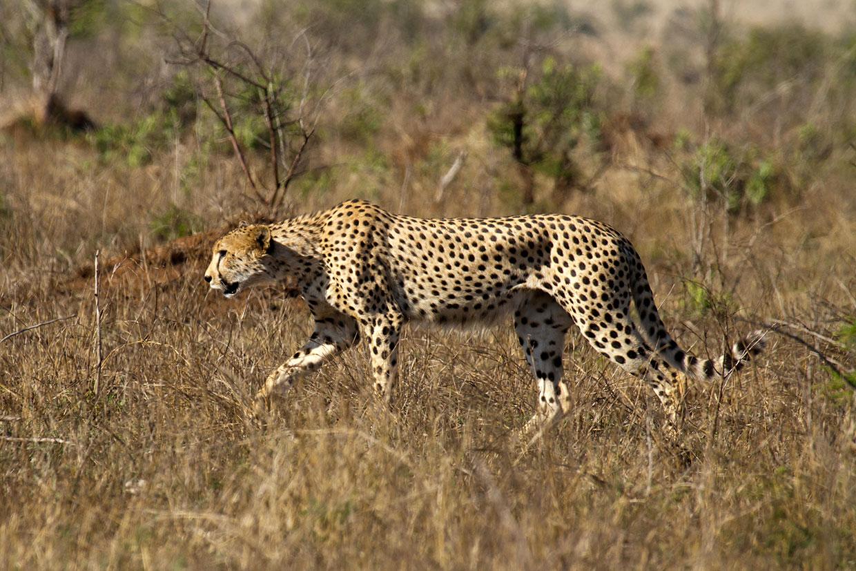 Kenya Tsavo