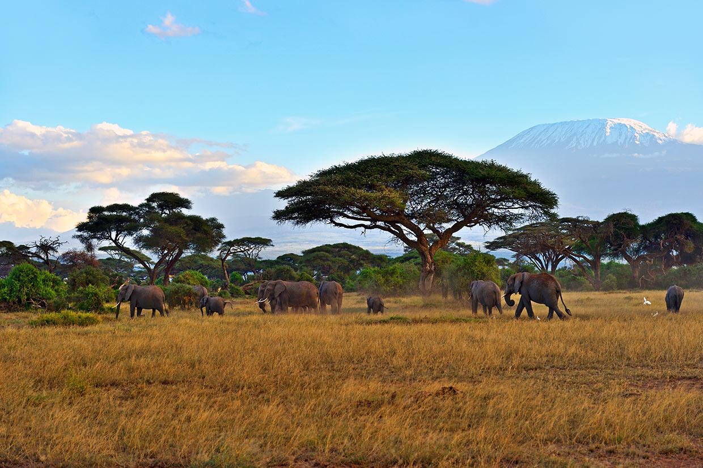 Kenya Elefanti Kilimanjaro