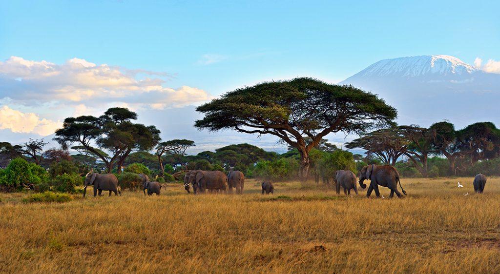 Kenya Kilimanjaro copertina
