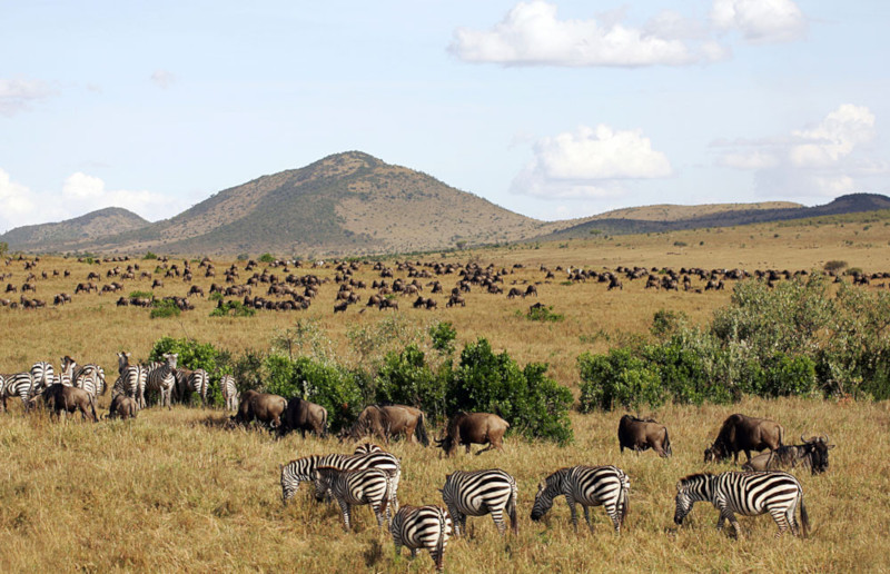 Parco Masai Mara in Kenya