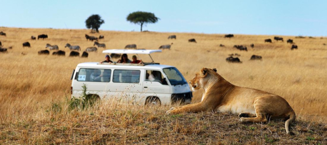 Parchi Safari in Kenya